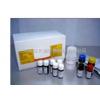 脱钙终点检测试剂盒