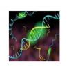 全基因组SH2结构域GST融合蛋白