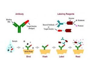 酶联免疫吸附法