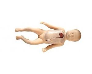 新生儿外周中心静脉插管模型