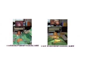 高仿真腹腔镜手术技能训练人体模型
