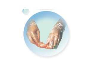 高/低密度聚乙烯手套 / HDPE手套