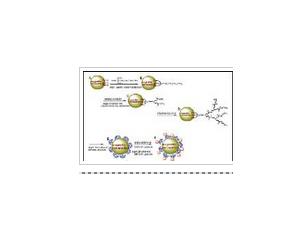 树形分子系列产品