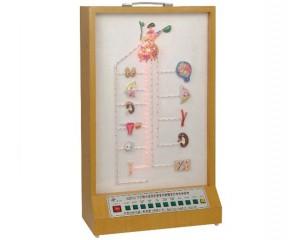 人体解剖医学训练模型