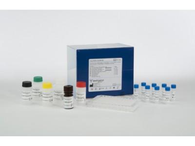 牛热休克蛋白90(HSP-90)ELISA Kit