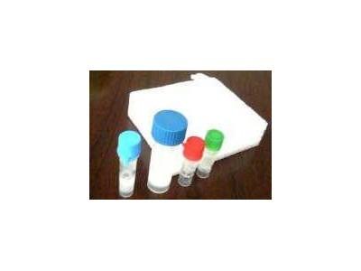 MBI酶系列PCR与RT-PCR报价