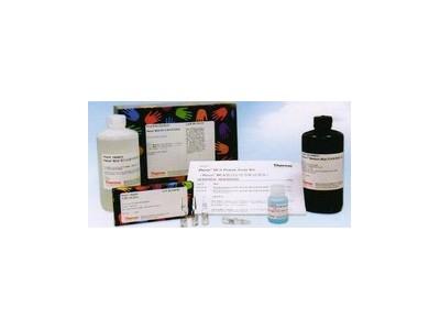 BCA 蛋白定量试剂盒