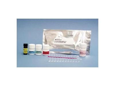 黄曲霉毒素检测试剂盒