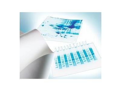 Millipore PVDF转印膜