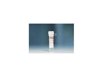 磁珠Mag COOH-500(浓度 10mg/ml)
