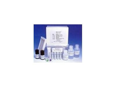 大鼠膜联蛋白Ⅴ(ANX-Ⅴ)ELISA试剂盒