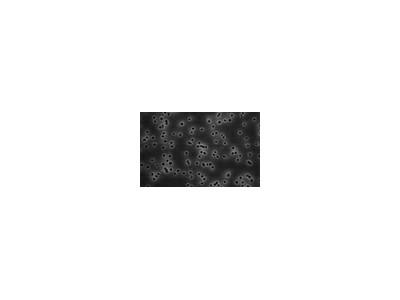 Isopore™ Membrane Filters