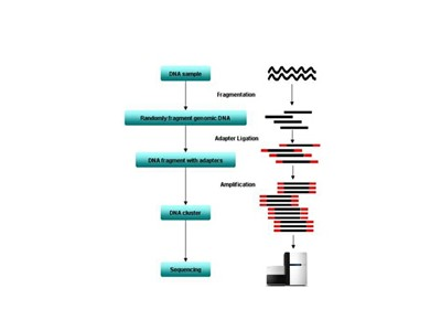 动植物基因组重测序