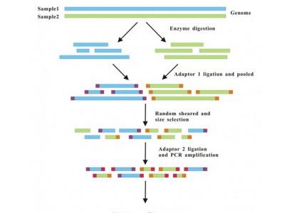 简化基因组测序