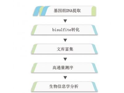 全基因组甲基化测序