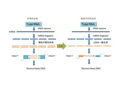 原核生物转录组测序