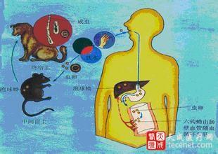 寄生虫病的综合防治