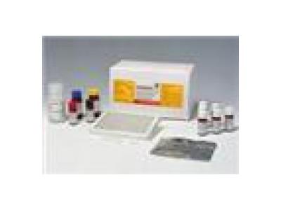黄曲霉毒素M1检测试剂盒