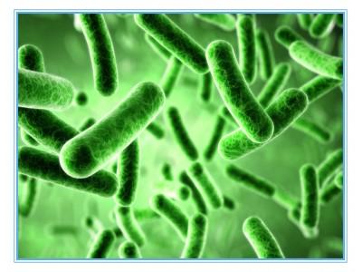 【汇总】微生物类检测