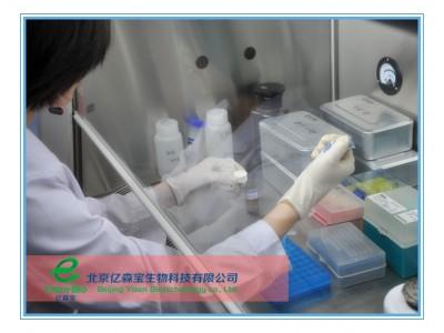 肉毒杆菌PCR检测试剂盒