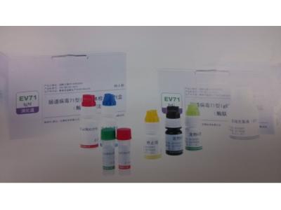 肠道病毒EV71型
