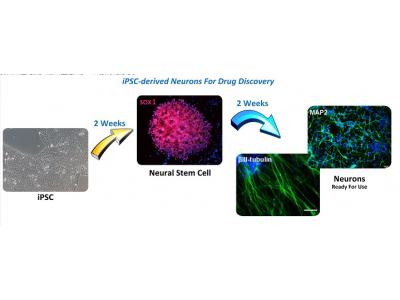 药物开发-神经元