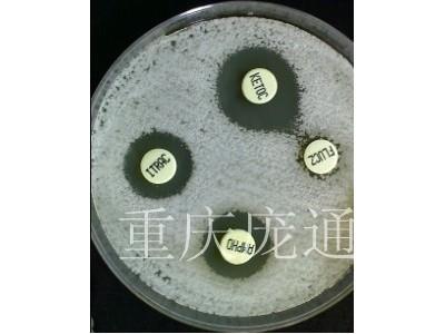 真菌药敏试验琼脂平板