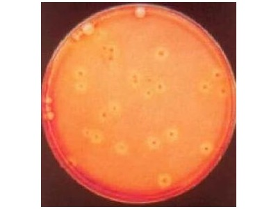 L9043-5MG葡萄球菌溶菌素