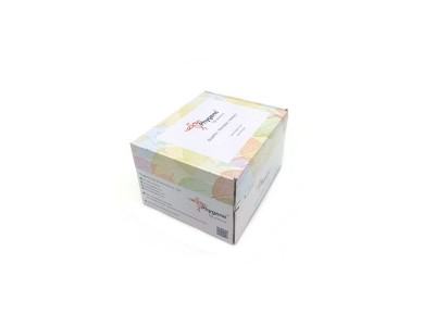 PH1503   Western Blot试剂盒(DAB-小鼠IgG)Phygene