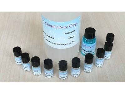 BCA蛋白质定量试剂盒