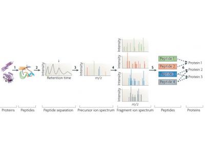 定性定量蛋白质组服务