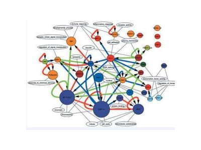 药物基因组相关分子检测