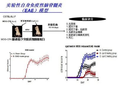 实验性自身免疫性脑脊髓炎模型 (EAE)