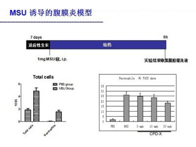 MSU诱导的腹膜炎模型