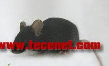 【DNA显微注射转基因小鼠服务保质保量】