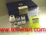 DNA甲基化修饰试剂盒
