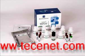 孔雀石绿、氯霉素、硝基呋喃检测试剂条