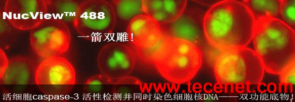NucView 488双功能细胞凋亡试剂盒