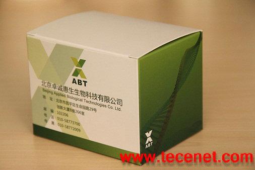 副溶血性弧菌毒力基因多重PCR检测试剂盒