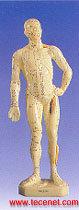 人体针灸模型