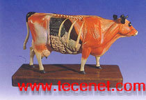牛体针灸模型