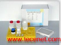 正品钙卫蛋白ELISA试剂盒(血清/血浆/尿)