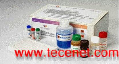 肺炎衣原体抗体IgM ELISA试剂盒现货供应