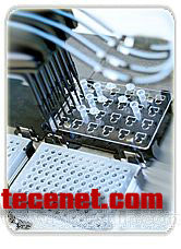 TaqMan Real-time PCR