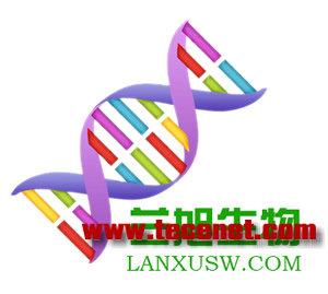 人肌酸激酶/人醛缩酶/人组织蛋白酶试剂盒