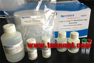 血液DNA提纯试剂盒