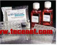 BD BioCoat细胞培养基系统
