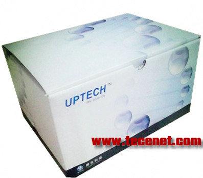 一步法RT-PCR扩增试剂盒