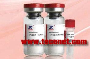 重组人源胰蛋白酶 Cas: 9002-07-7