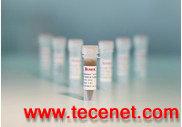 Protein A(A/G) 免疫沉淀磁珠